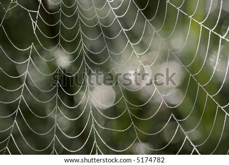 Water drops on the web - stock photo