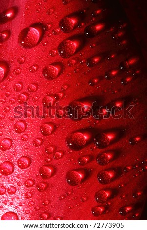 water drops on tulip petal close-up background - stock photo