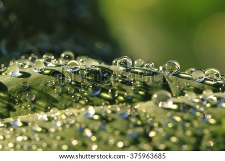 water drops texture as nice leaf background