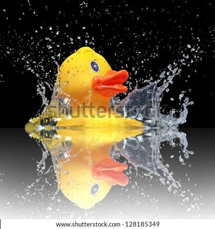 Water duck - stock photo