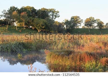 Water edge at beach meadow - stock photo