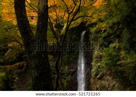 Water Falling at Yoro Waterfall in Gifu, Japan, November, 2016