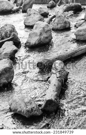 Water flowing among tree trunks and stones - black and white. - stock photo