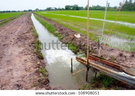 Water for the rice field. - stock photo
