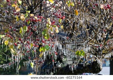 Water has frozen on a branch of an apple-tree and has turned to icicles. The first autumn frosts - stock photo