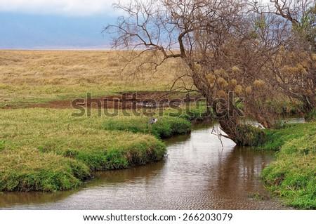 Water hole in Ngorongoro Conservation Area, Tanzania - stock photo