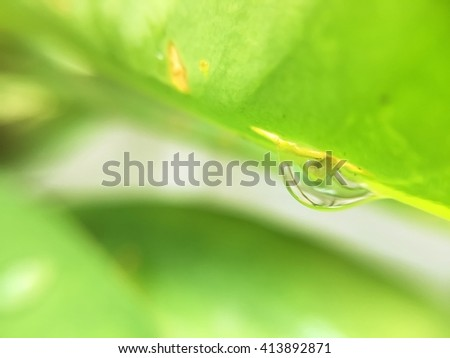 water in leave with soft focus