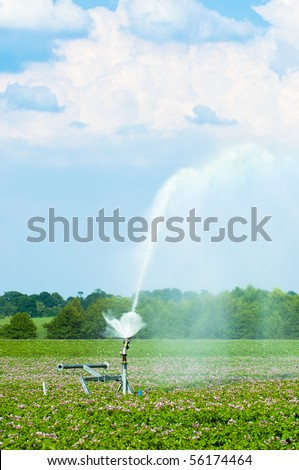 Water irrigation of potato crops in Shropshire with beautiful summer sky