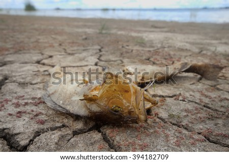 water level fell in lake and fauna perishes - stock photo