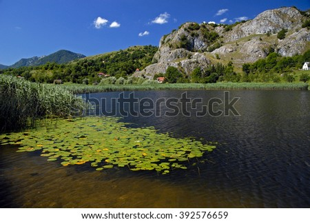 Water lilies on the mountain lake