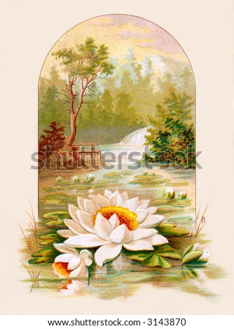 Water lily - circa 1890 greeting card illustration