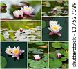 water lily  collage. - stock photo