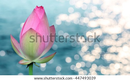 Water lily flower over colorful background - stock photo