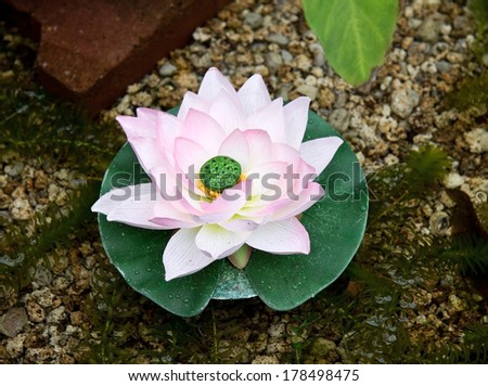 Water lily fountain - stock photo