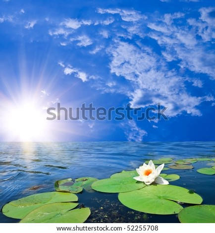 water lily in a rays of rising sun - stock photo
