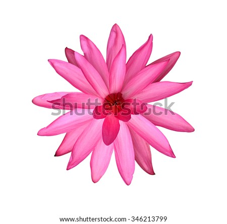 Water lily isolate on the white background - stock photo