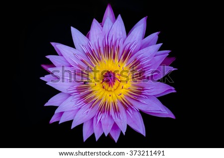 water lily,lotus isolate