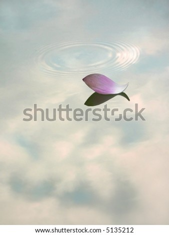 Water lily petal floating on water with reflection of clouds in sky. - stock photo