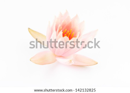 water lily studio shoot with white background