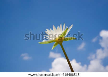 Water Lily with Blue sky
