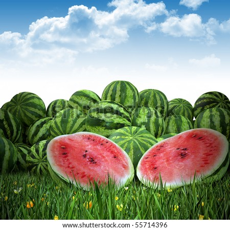 Water Melon on - stock photo