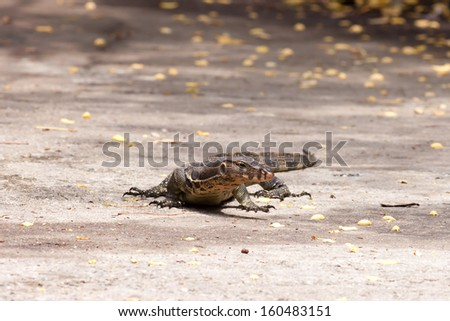 Water monitor on ground