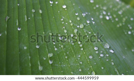 Water on Banana Leaf