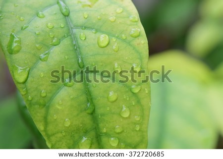 water on green leaf after rain - stock photo