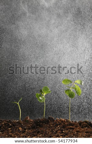 water or rain puring to the plant - stock photo