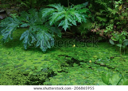water plants in an garden pond - stock photo