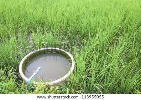 Water pond made ??of cement in the rice field ,Access to agricultural irrigation systems. - stock photo