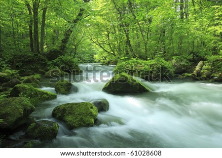 water spring in forest