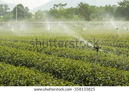water sprinkler at the tea farm