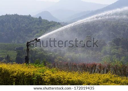 water sprinkler in orange field - stock photo