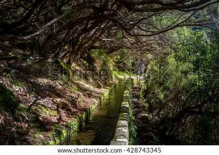 Water stream and mystic forest at popular hiking route levada 25 fountains Rabacal. Madeira island, Portugal.