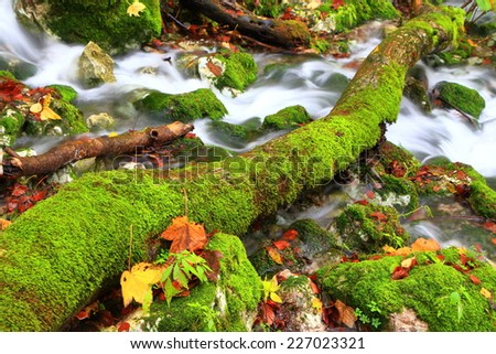 Water stream flowing under a moss covered log in autumn - stock photo