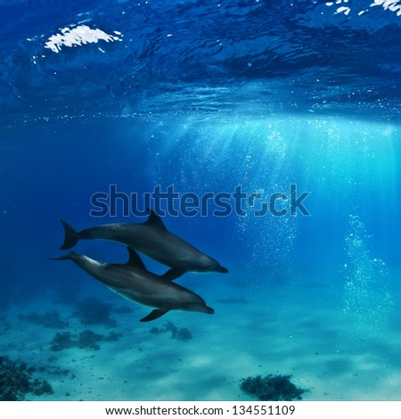 water surface a pair of dolphins playing with air bubbles in sunrays underwater
