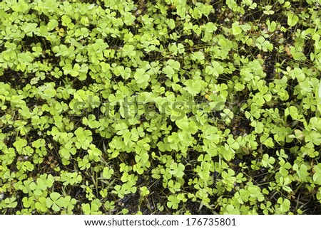 Water surface covered with aquatic weeds - stock photo