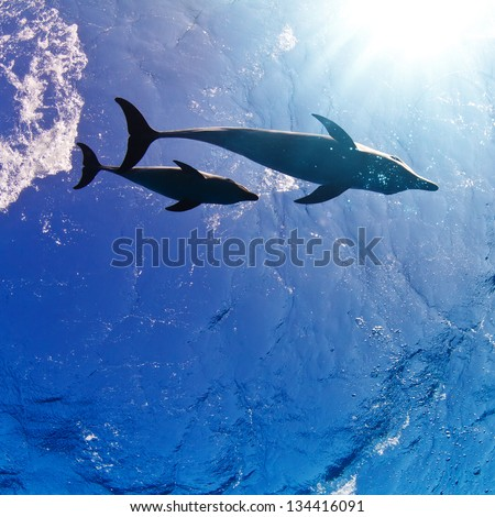water surface with sunrays and two funny nice family dolphins underwater - stock photo