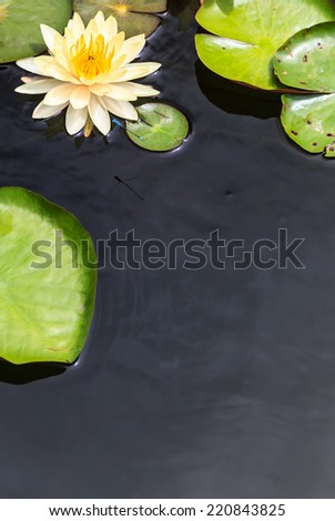 Water Surface with Yellow Water Lily and Green Lea - stock photo