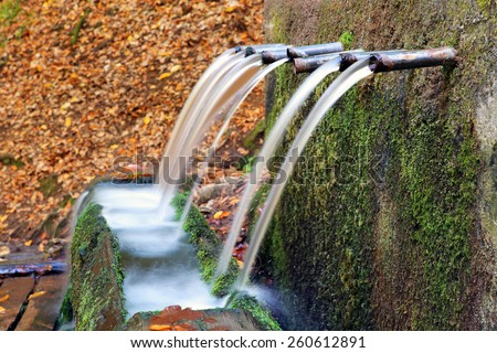 water tap in a stump in forest - stock photo