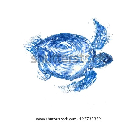 Water turtle - stock photo