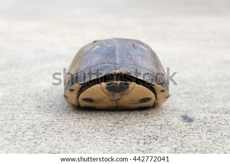 water turtle dodge in  tortoiseshell on the  road - stock photo