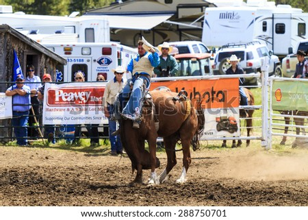 WATER VALLEY, CANADA - JUN 6 2015:Unidentified Cowboy participating in the at the Bareback Bronco Water Valley Rodeo.This annual event is important for the rural as well as the sport loving community.