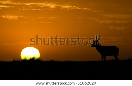 Waterbuck silhouette with African sunrise/sunset - stock photo