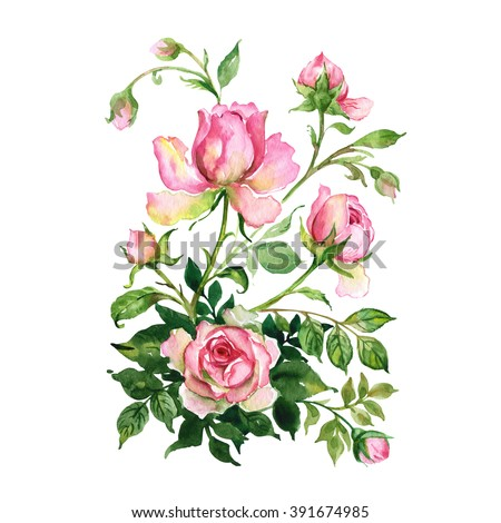 Watercolor a bouquet of roses with buds - stock photo