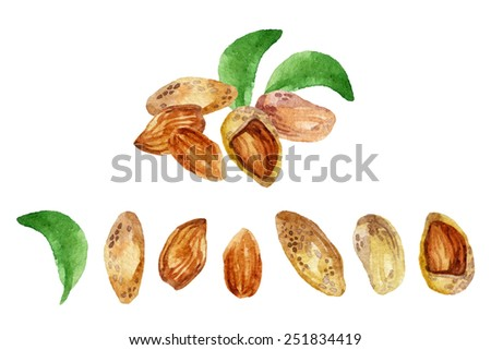 Watercolor almond set. Hand painted illustration - stock photo