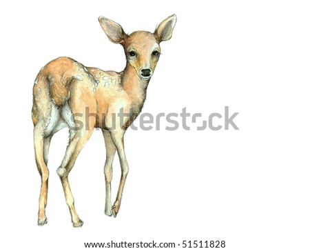 Watercolor and Graphite Fawn Illustration - stock photo