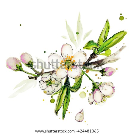 Watercolor apple flower illustrations. White and pink apple blossoms on a branch, isolated on a white background. Apple blossom. Botanical isolated illustration. Hand drawn. Apple tree in blossom. - stock photo