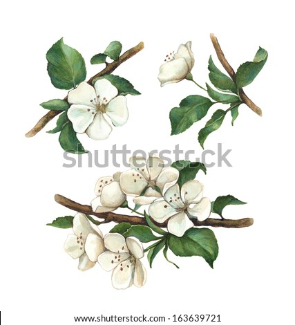 Watercolor apple flowers set - stock photo